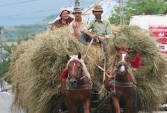 Three on a Haycart (romaniashots) Tags: horses men farming romania agriculture haying maramures haycart interestingness132 i500 romaniashots