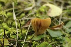 More Mushrooms!