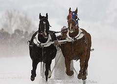 Cutter Races, Jackson Hole Wyoming (Daryl L. Hunter - Hole Picture Photo Safaris) Tags: jacksonholewyoming cutterraces