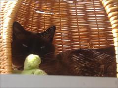 Whilly (aliywhilly) Tags: cats pets chats kitty kittens gatos felinos felines gatto katzen gatti mascotas kats kots elreydemicasa