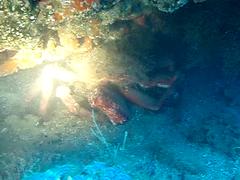 centollo en bolones (coismarbella) Tags: crustaceos