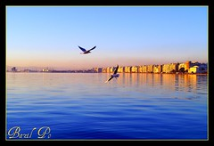 Thessaloniki - Flying & Planing - Macedonia - GREECE (bazilpoPHOTO) Tags: blue landscape flying minolta seagull greece macedonia grecia thessaloniki konica griechenland whitetower salonica planing  km7d 1735mmf28 heliography   bazilpo