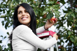 Apple Picker - Search Marketing Parable