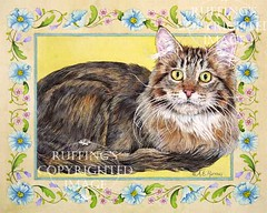 """""""Gentle Giant"""" AER96 by A E Ruffing Maine Coon"""