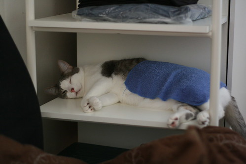 Nothing like a cold, wet facecloth on a hot day