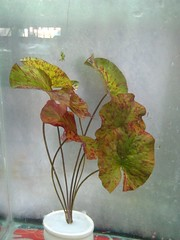 Thủy Sinh Tuấn Anh-Chuyên cây & Rêu Thủy Sinh, Cá Cảnh Biền & Hồ Cá Cảnh Biển - 5