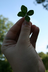 my first four-leaf clover ever