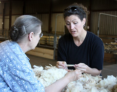 Learning to class wool
