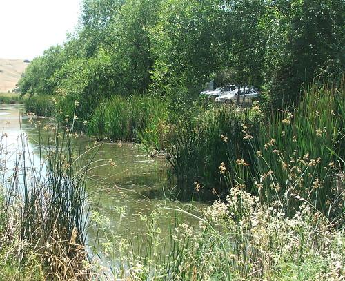 Wetland Scene 2