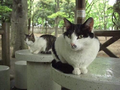 猫@世田谷区