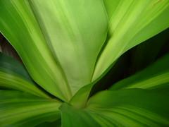 Tronchetto della Felicit  2 (coccinella75) Tags: verde colore giallo luce felicit sfumature tronchetto striscie