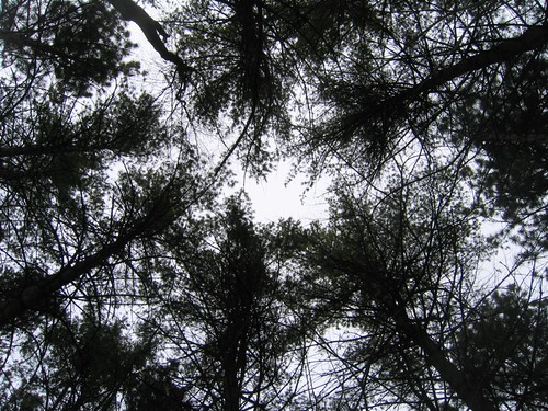 High contrast tree tops