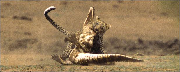 ealeopard118c