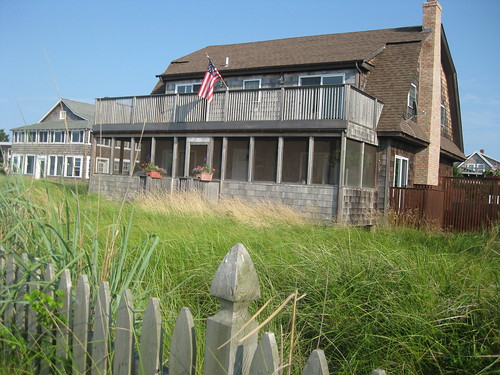 Sea grass gone wild, on Fire Island, New York