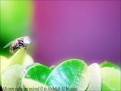 A Bug portre (A.al-Muzaini) Tags: macro bug am nikon sigma 70300mm dg abdullah d60 almuzaini