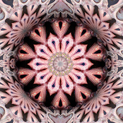 Design  (bony marony) (Gravityx9) Tags: abstract photoshop flight chop photohsop 0808 flight2 kfun psart psfo txpinky 080708 coloursplosion artmadebyyou kaleidospheres 022809