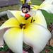 Bee Mario par ecpica