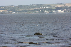 """Culross • <a style=""""font-size:0.8em;"""" href=""""http://www.flickr.com/photos/62319355@N00/2833961854/"""" target=""""_blank"""">View on Flickr</a>"""