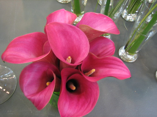 Pink Calla Lillies
