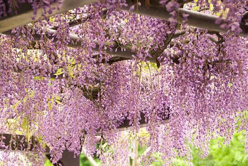 Ofuna Botannical Gardens  005
