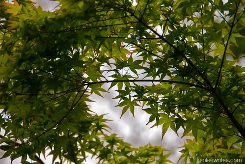 Ofuna Botannical Gardens  010