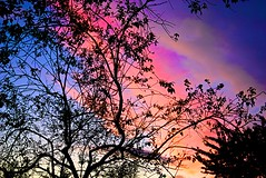 Incandescent Sky (HDR Cafe) Tags: pink blue sky color tree silhouette purple artisticexpression abigfave anawesomeshot afsdxzoomnikkor1755mmf28gifed