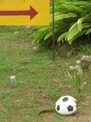 DSCN1778_plant... (s2art) Tags: bangkok thailand kohsamui holiday hotels 640x480 2008 cpx3700 lofi lowrez nikon vga ball sport game golf football grass yellow green coolpix 3700