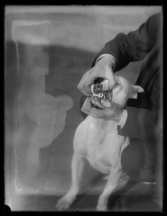 Dog Training (George Eastman House) Tags: dog dogs training pull arms teeth bullterrier snarl georgeeastmanhouse dogtrainers color:rgb_avg=5a5a5a williammvanderweyde geh:accession=197400560316