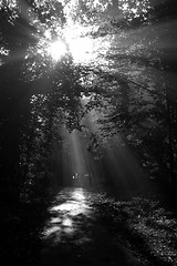 Breakthrough (ElWanderer) Tags: uk trees light england blackandwhite bw sun sunlight tree monochrome leaves blackwhite woking path surrey beam lamppost desaturation desaturated shafts beams pathway shaft