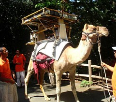 Solar Powered Camel by momentimedia