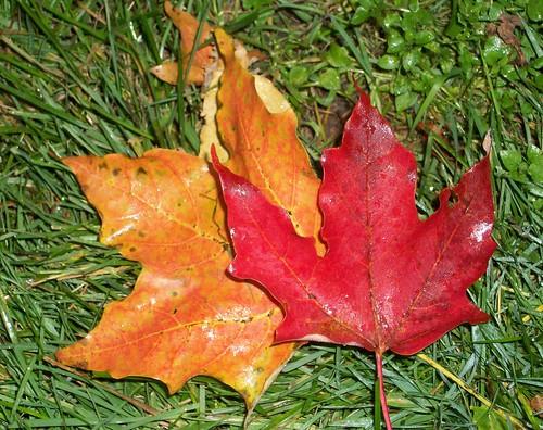 Leaves_101608