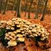 mushroom nation
