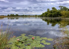 England, Northamptonshire: Lily View (Tim Blessed) Tags: uk sky nature clouds landscapes countryside scenery lakes lilies wetlands aplusphoto singlerawtonemapped inspiks|inspirationalpictures