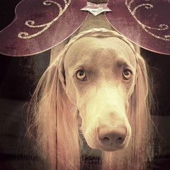 ~longhaired weimaraner fairy princess~ (saikiishiki) Tags: pink portrait cute texture love thanks by glitter mouth hair puppy square star wings eyes long princess sweet magic adorable fairy weimaraner kawaii magical fae weim mukha mywinners thelittledoglaughed faeree essenceofadream
