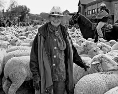 True Cowgirl (Mountain Mike) Tags: horses montana sheep idaho lamb cowgirl herd sheepherding ketchum herding