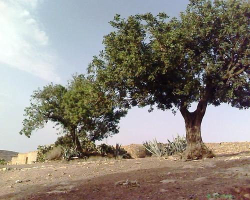 Bouthwar Béni Znassen