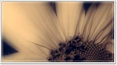 SUAVE (Renato Leme) Tags: flower nature flor w50 frenteafrente ltytr1 renatoleme