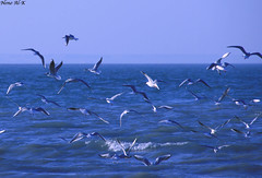 Time to Fly (Nouf Alkhamees) Tags: bird birds canon fly time kuwait nono nof alkuwait     nouf      alkhamees noufalkhamees