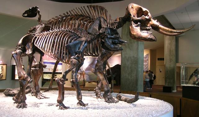 American Mastodons