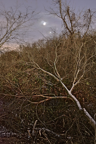 Forest 44 Conservation Area, near Valley Park, Missouri, USA - fallen tree at night with conjuction of moon and planets