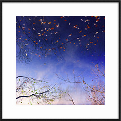 goodby autumn (gregor H) Tags: blue autumn leave water swimming down upside goodby
