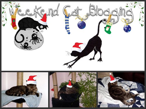 Weekend Cat Blogging #183