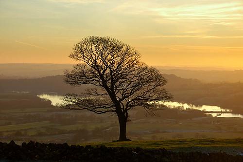 Floating tree (geoffspages) Tags: landscape geotagged geo:lat=53158493 geo:lon=1999705