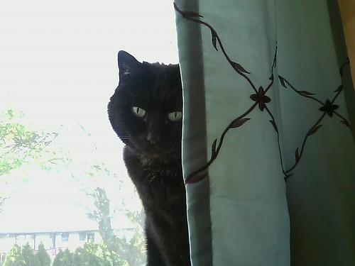 mina, staring me down