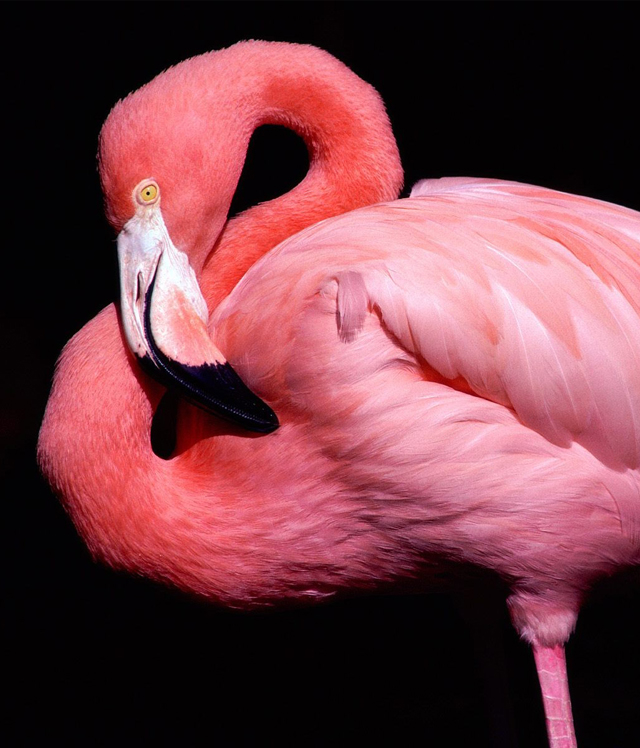 Honeysuckle + Watermelon + Pink 5 -flamingo