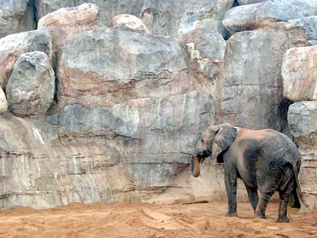 elephant-valencia