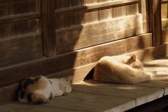 手前の子にピント合わせろよなぁ / Sleeping cats