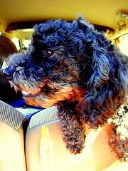 Eko with Torn Back Seat