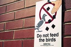 לדוגמא, אל תאכילו את הציפורים