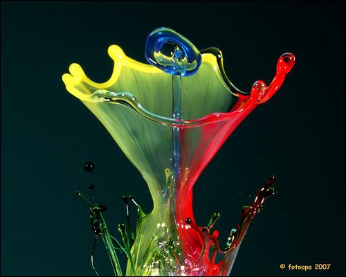 flower by fotoopa